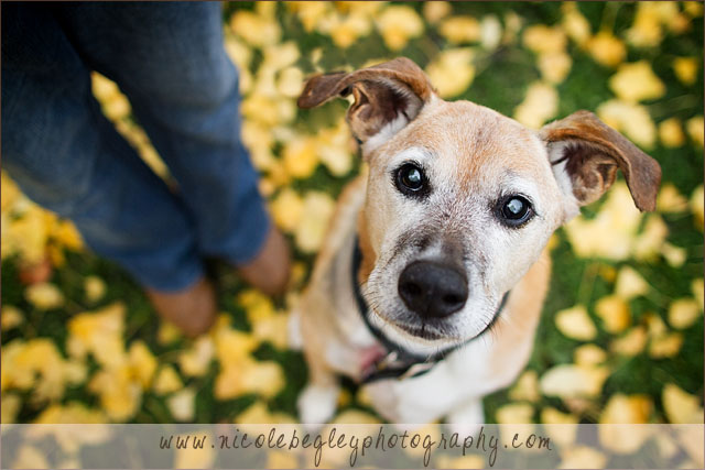 Donate Services Pet Photography